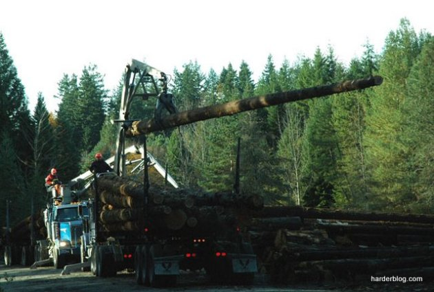 loggingpickmeup75