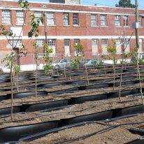 urban orchard (3)