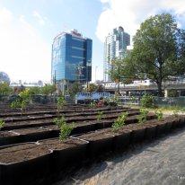 urban orchard (4)
