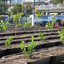 urban orchard (6)
