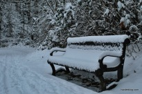 The Unwanted Bench
