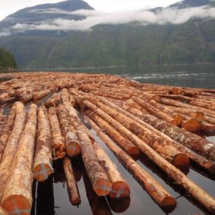 Sold! Hemlock in Hayden Bay awaits shipment to China