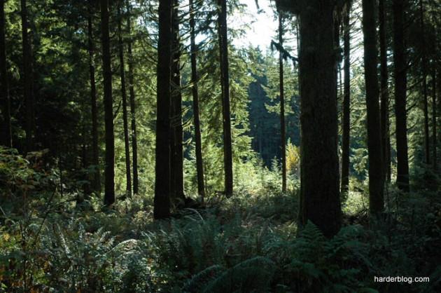 forestfascination40