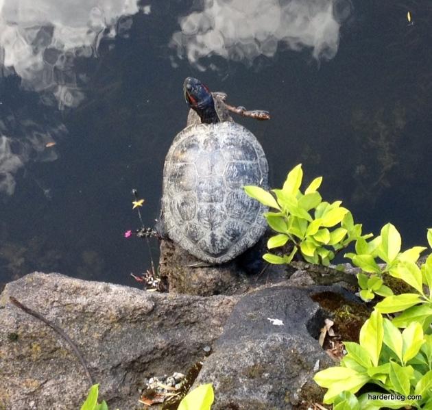 Turtle Derby