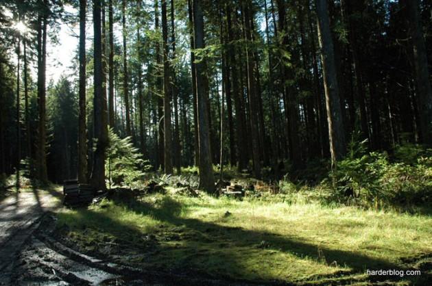 woodsyscene55