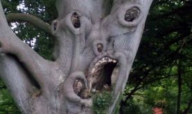 BRITAIN - Scariest Tree